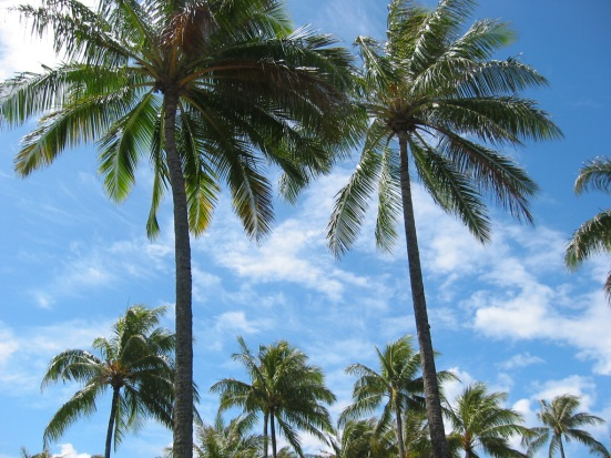 palm-trees-03