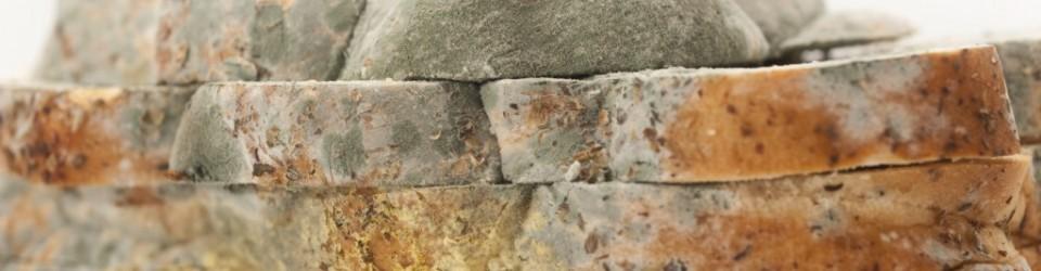 moldy-bread-960x250