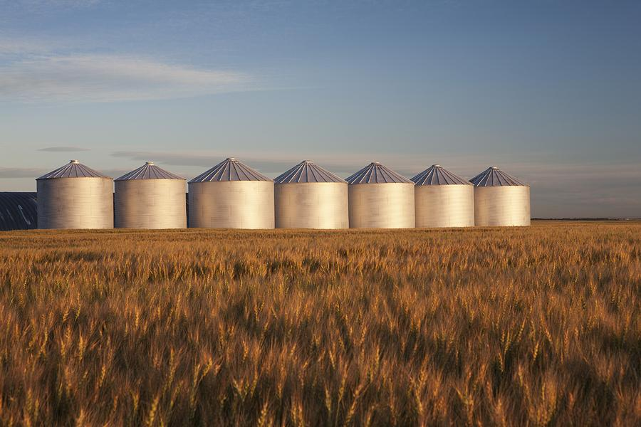 row-of-shiny-metal-grain-bins-in-a-michael-interisano